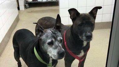 2 Dogs Left In Allen Park Petco Bathroom In Foster Home Senior Dog Petco Animal Rescue