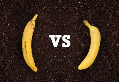 Do You Know The Difference Between Bananas And Plantains Read Our Latest Blog Post To Find Out Banana Plantain Bananas Plantains Cooking Bananas Banana