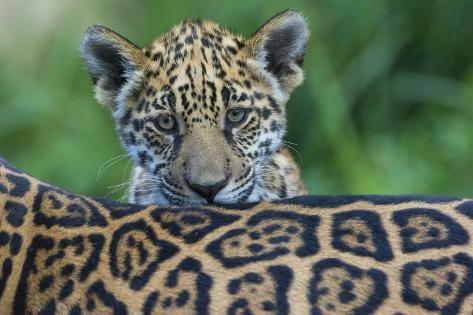 Pin Op Jaguar Classe