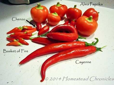 Best Pepper Powders On The Planet - Homestead Chronicles