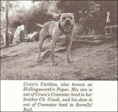 Crum's