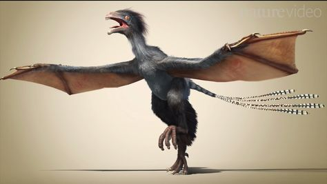 The dinosaur Yi Qi is one of the strangest flying creatures discovered.