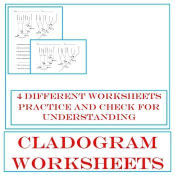 Cladogram Worksheet Answer Key - Thekidsworksheet