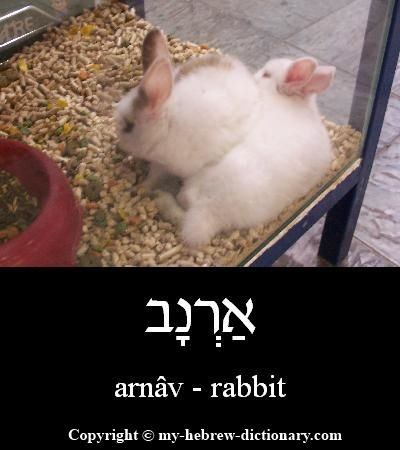 Pin by Hebrew for Busy Adults on Learn Hebrew | Learn hebrew