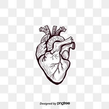 Fig Painted Black Heart Heart Human Body Organ Png Transparent Clipart Image And Psd File For Free Download Heart Illustration Heart Hands Drawing Heart Photography