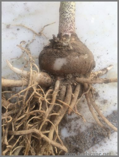 Identify Flower Bulbs Gardening For Beginners In 2020 Bulb Flowers Flower Bulbs Garden Flower Seedlings