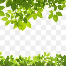 Moldura Png Images Vetores E Arquivos Psd Download Gratis Em Pngtree Leaf Texture Leaf Clipart Small Leaf