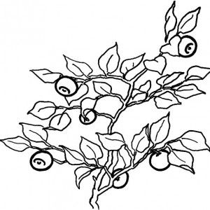 Wild Blueberry Bush Coloring Pages Wild Blueberry Bush Coloring