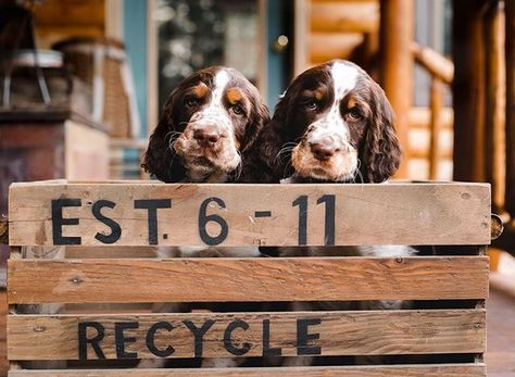 Can You Imagine Waking Up Every Morning To These Adorable Faces Leahwagnerphotography Famil With Images Nyc Photographers Springer Spaniel Puppies Family Photography
