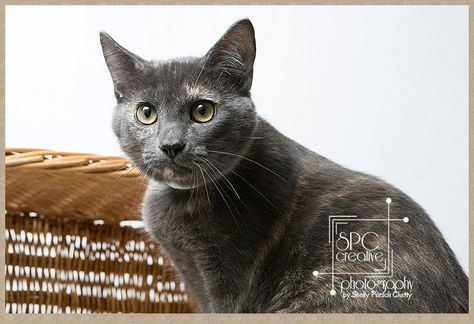 This Sweet Kitten In Katy Tx Need A Home Click Through To Website For Details Or Visit Green Trails Animal Clinic S Animal Photography Pet Clinic Animals