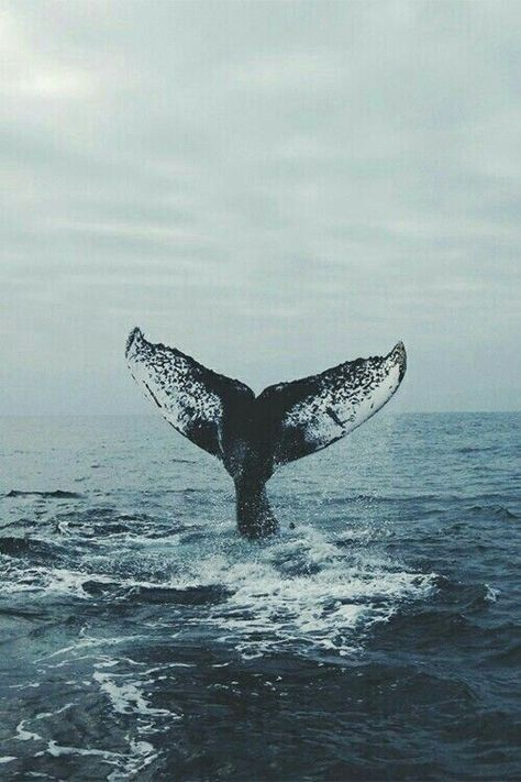 whale, ocean, and sea image Ocean Wallpaper, Tumblr Wallpaper, Iphone Wallpaper Whale, Beach Aesthetic, Ocean Creatures, Humpback Whale, Photo Wall Collage, Ocean Life, Marine Life