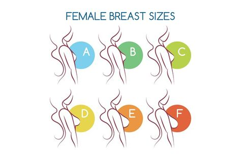 Set of silhouettes icons of various female breast size (1296288)   Icons   Design Bundles