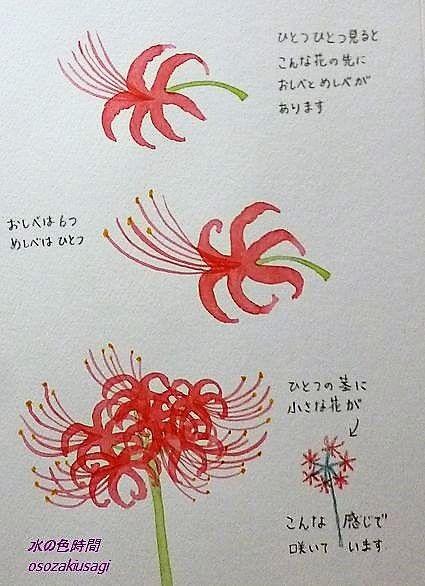 最高の壁紙 無料ダウンロード イラスト 花 描き方 花 イラスト 彼岸花 イラスト 花 描き方