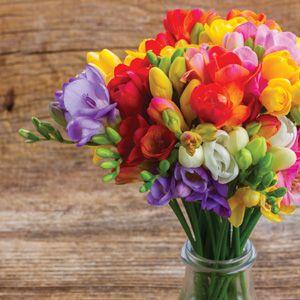 Freesia Giant Mixed Pre Order Garden Express In 2020 Freesia Flowers Flower Pot Design Garden Express