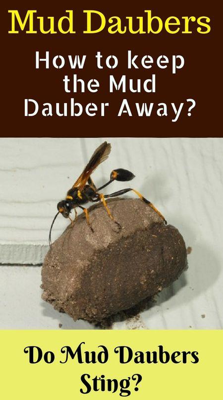 ee1be96bb3b73b7277777d0bd79a574b - How To Get Rid Of Small Paper Wasp Nest