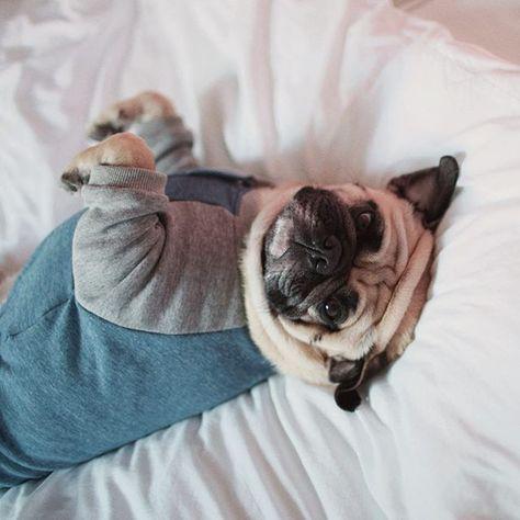 buzzfeedanimals Pajamas all day! 😴 . . ....
