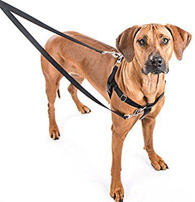 Amazon Com 2 Hounds Design Freedom No Pull Dog Harness Training