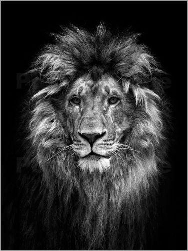 Premium Poster Alles Was Das Licht Berührt Löwen Kopf