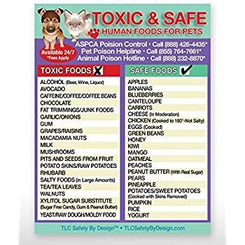 Toxic And Safe Foods Poison For Pets Dogs Cats Emergency Ice Home Alone Refrigerator Safety Magnet Qty 1 Foods Dogs Can Eat Safe Food Cat Emergency