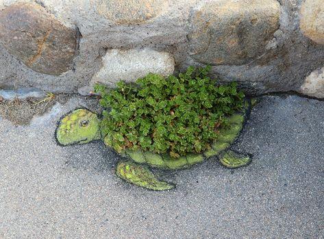 It's what all the fashionable turtles are wearing this spring. David Zinn at Heisler Park, Laguna Beach, David Zinn, New York Graffiti, Street Art Graffiti, Graffiti Artists, 3d Street Art, Land Art, Pavement Art, Sidewalk Chalk Art, Photo Images