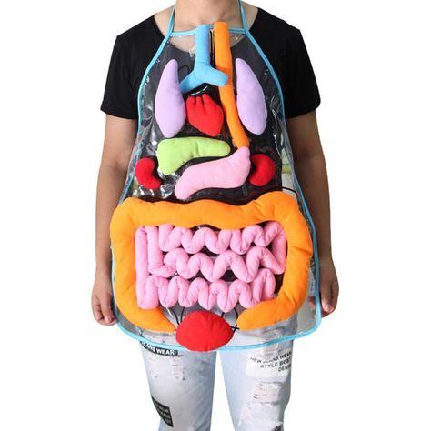 3D Anatomy Apron Awareness Educational Home Preschool Teaching Toy