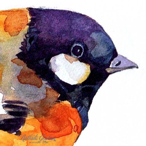 Bluetit study, watercolour Natalie Graham