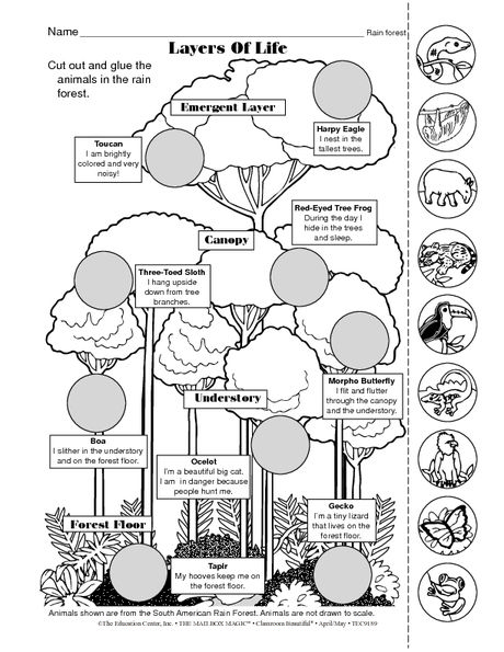 Science Worksheet: Rain Forest Animals - The Mailbox Rainforest  Classroom, Rainforest Animals, Rainforest Activities