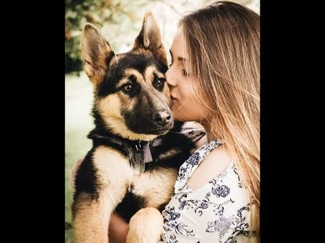 Call 8885891461 Germanshepherd Dogsforsale Puppiesforsale Dogs For Sale In Hyderabad Dogs Pets Youtube In 2020 Pure Breed Dogs Where To Buy Dogs Dogs For Sale