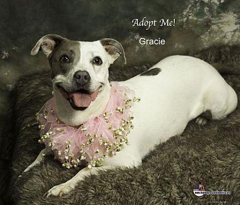 11 Adopt A Special Needs Dog Ideas Dog Adoption Pet Adoption Pets