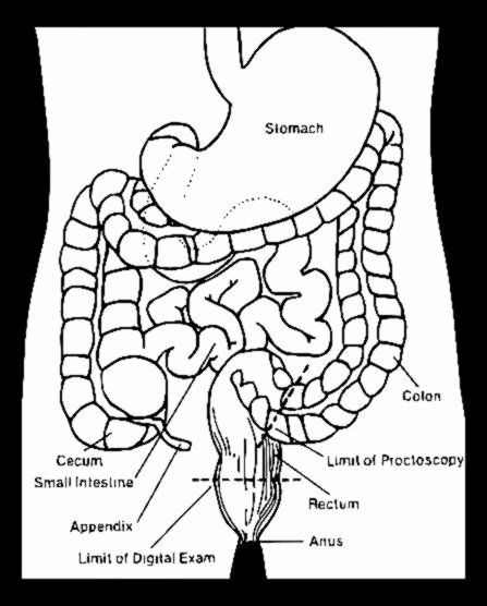Anatomy Coloring Book Free New 1000 Images About Anatomy Academy And Forensics On Pinterest Anatomy Coloring Book Colon Cleanse Coloring Books