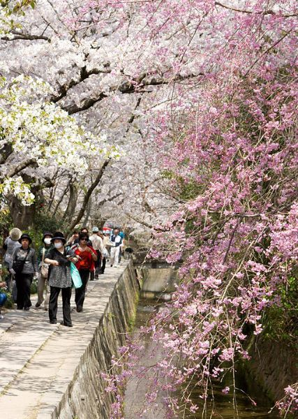 10 Best Places To See Cherry Blossom In Japan Kyuhoshi Beautiful Places To Travel Cherry Blossom Japan Cherry Blossom Tour