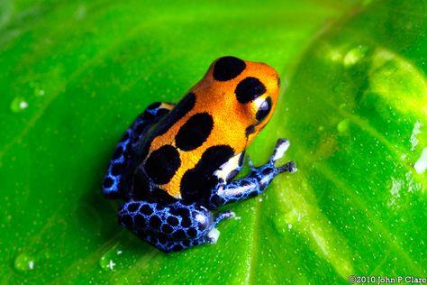 Varadero tadpole- metamorphosing done! Scales Pinterest Varadero - bar für küche