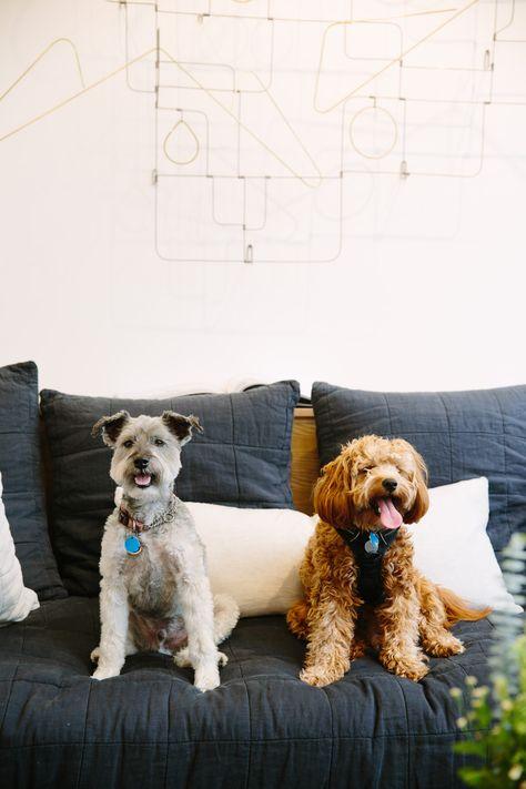Akc English Bulldog Puppies For Sale In Utica New York Classified