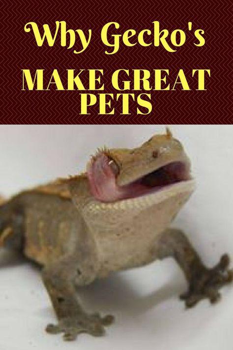 Why Geckos Make Great Pets Best Pets For Kids Pet Lizards Best Lizard Pets