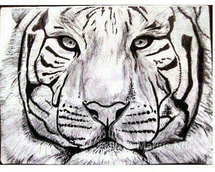 Dessin Realiste D Un Tigre De Face Realise Au Crayon Graphite