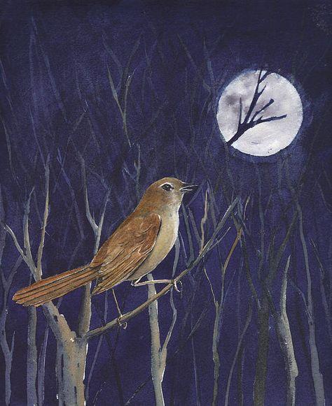 Nightingale by Rusty Harden