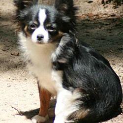 Adopt Marylou On Pitbulls Pitbull Terrier Animal Shelter