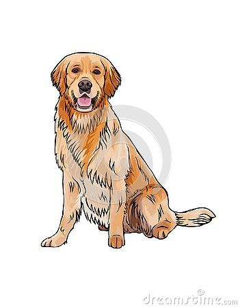 Vector Cartoon Sketch Drawing Of The Whole Body Of A Smiling Yellow Dog Breed G Golden Retriever Illustration Golden Retriever Cartoon Golden Retriever Drawing