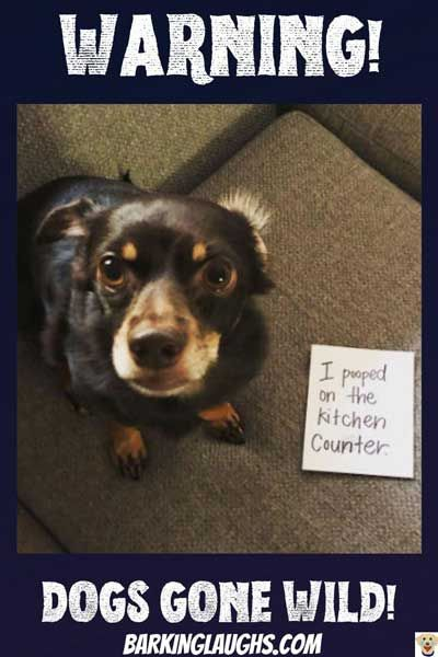 20 Funny Pictures Of Shaming Dogs Do You Think They Re On The