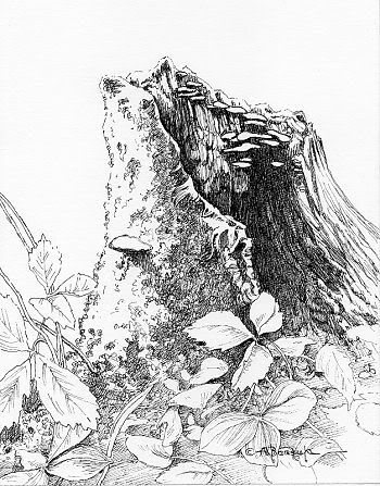 Tree stump with mushrooms. vector illustration, eps10. vectors ...