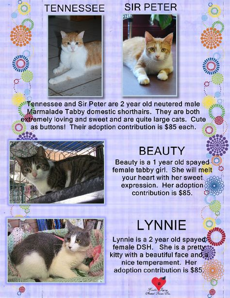 Available For Adoption From Brooke S Legacy Rescue 239 434 7480 Cat Adoption Cats And Kittens Cats