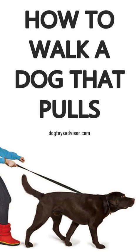 Has Walking Your Dog Turned Into A Constant Game Of Tug O War