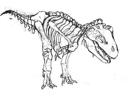 Tyrannosaurus Rex Coloring Page Skeleton Drawings Dinosaur
