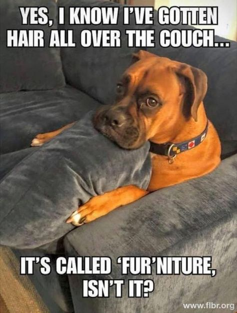 24 Funny Animal Pictures Of The Day 24 Lustige Tierbilder des Tages – Lustige Tiere – Täglich LOL Pics Dog Jokes, Funny Animal Jokes, Funny Cats And Dogs, Really Funny Memes, Cute Funny Animals, Stupid Funny Memes, Cute Baby Animals, Funny Cute, Funny Puppies