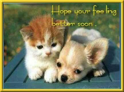 Feel Better Soon Kittens And Puppies Cute Animals Puppies And