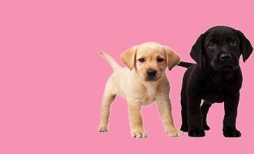 Online Pet Shop In Delhi For Dog Shop Pet Store In India Pet Shop Cat Breeder Dog Shop