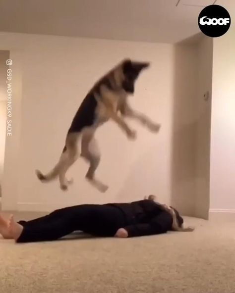This German Shepherd dog has learned how to do CPR on it's owner... We really don't deserve dogs 🐶❤️ #dog #dogmemes #dogquotes #dogbreeds #dogfunny #dogandpuppies #puppies #dogbig #dogsmall #dogtraining #dogideas #dogmom #dogtips #funnyanimals #dogisgood #cutedogs #cutebabyanimals #cutepuppies #animalhumor #animalmemes #dogs #animalscare #puppy