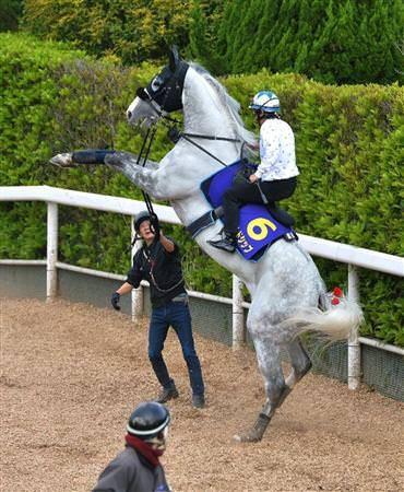 画像ゴールドシップ大暴れセットwwwwwwwww animals horses horse racing