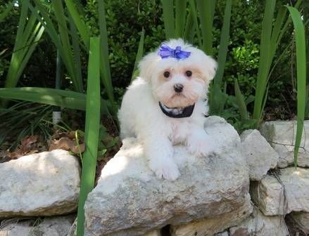 Find Your Dream Puppy Of The Right Dog Breed At 2puppies Com
