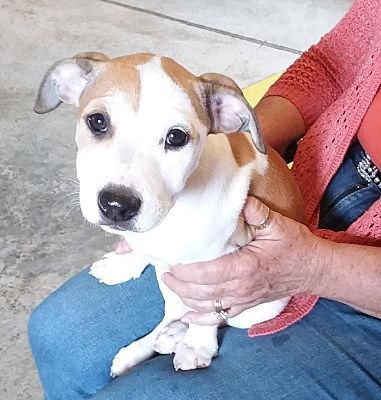 Troy Oh Mixed Breed Small Meet Julie Andrews A Dog For Adoption Pet Adoption Pets Dog Adoption